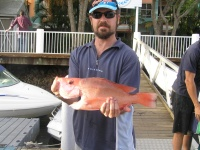 Queensland Fishing Charters Scarlet Sea Perch