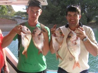 noosa fishing Small Snapper