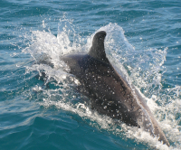 Noosa Day Tours Dolphin