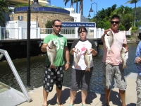 Sunshine Coast Fishing charter Sweetlip