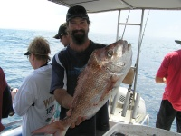 Sunshine coast fishing charter Brads Snapper