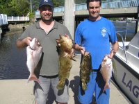 Sunshine coast fishing charter Estuary Cod