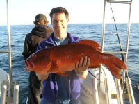 Sunshine coast fishing charter Coral Trout