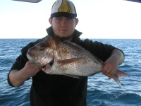 Noosa fishing charter Snapper